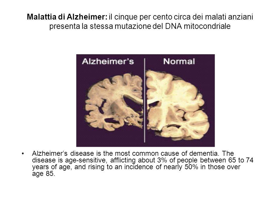 Malattia di Alzheimer: il cinque per cento circa dei malati anziani presenta la stessa mutazione del DNA mitocondriale