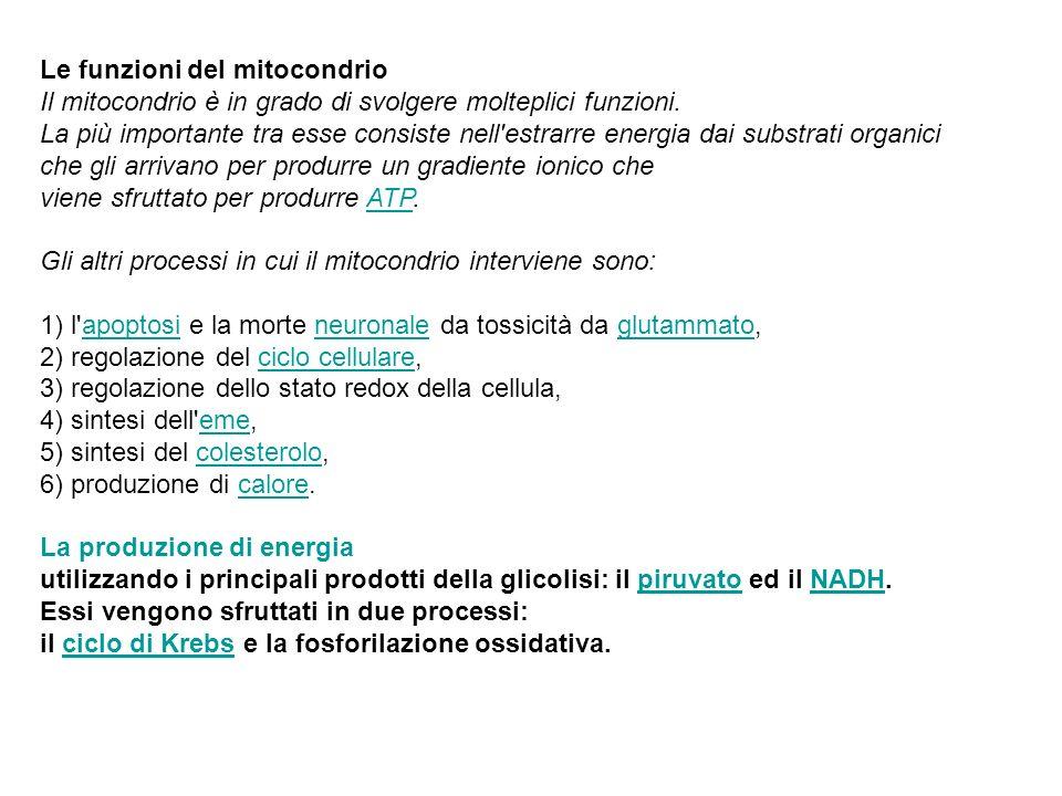 Le funzioni del mitocondrio