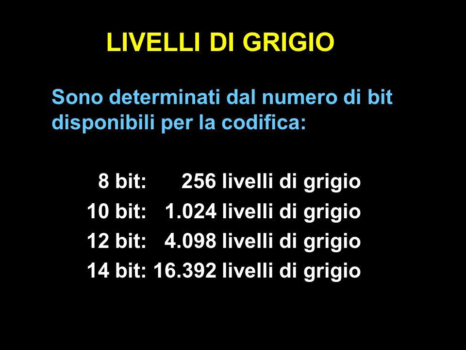 LIVELLI DI GRIGIO Sono determinati dal numero di bit disponibili per la codifica: 8 bit: 256 livelli di grigio.