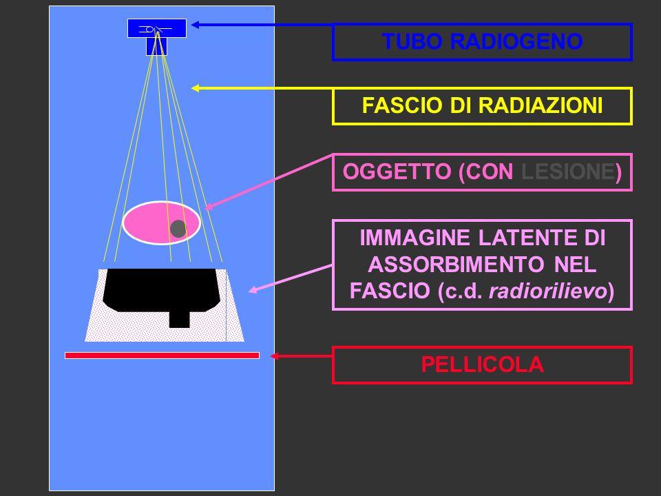 IMMAGINE LATENTE DI ASSORBIMENTO NEL FASCIO (c.d. radiorilievo)