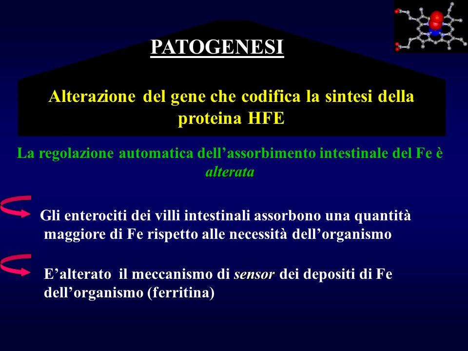 PATOGENESI Alterazione del gene che codifica la sintesi della proteina HFE. La regolazione automatica dell'assorbimento intestinale del Fe è.