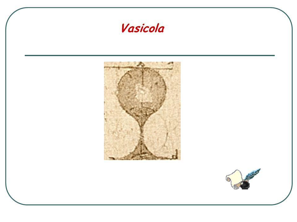 Vasicola