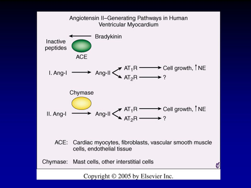 FIGURE 23-8 Pathways of angiotensin II formation