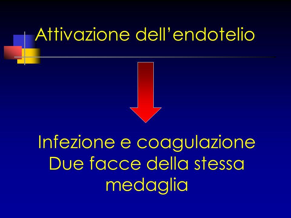 Attivazione dell'endotelio