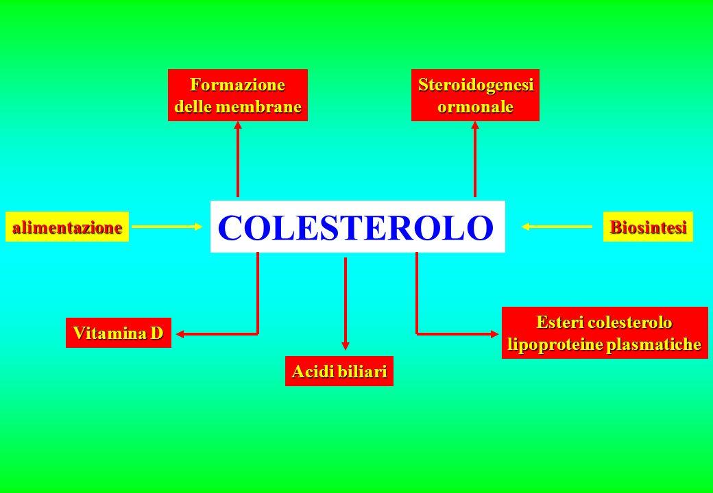 lipoproteine plasmatiche