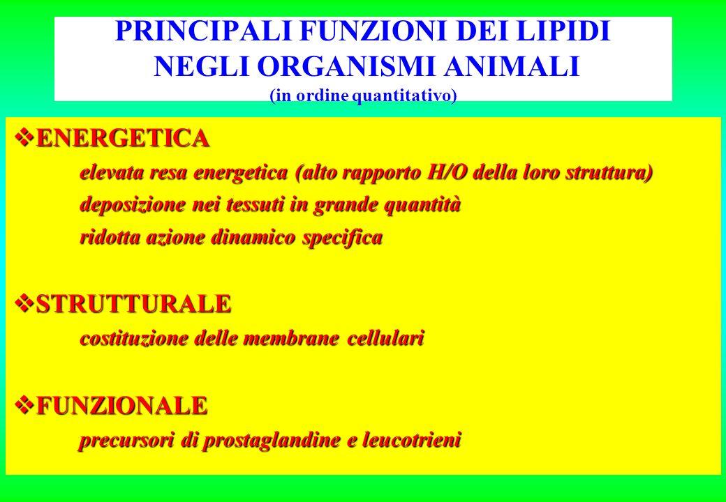 PRINCIPALI FUNZIONI DEI LIPIDI NEGLI ORGANISMI ANIMALI (in ordine quantitativo)