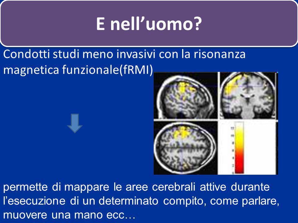 E nell'uomo Condotti studi meno invasivi con la risonanza magnetica funzionale(fRMI)