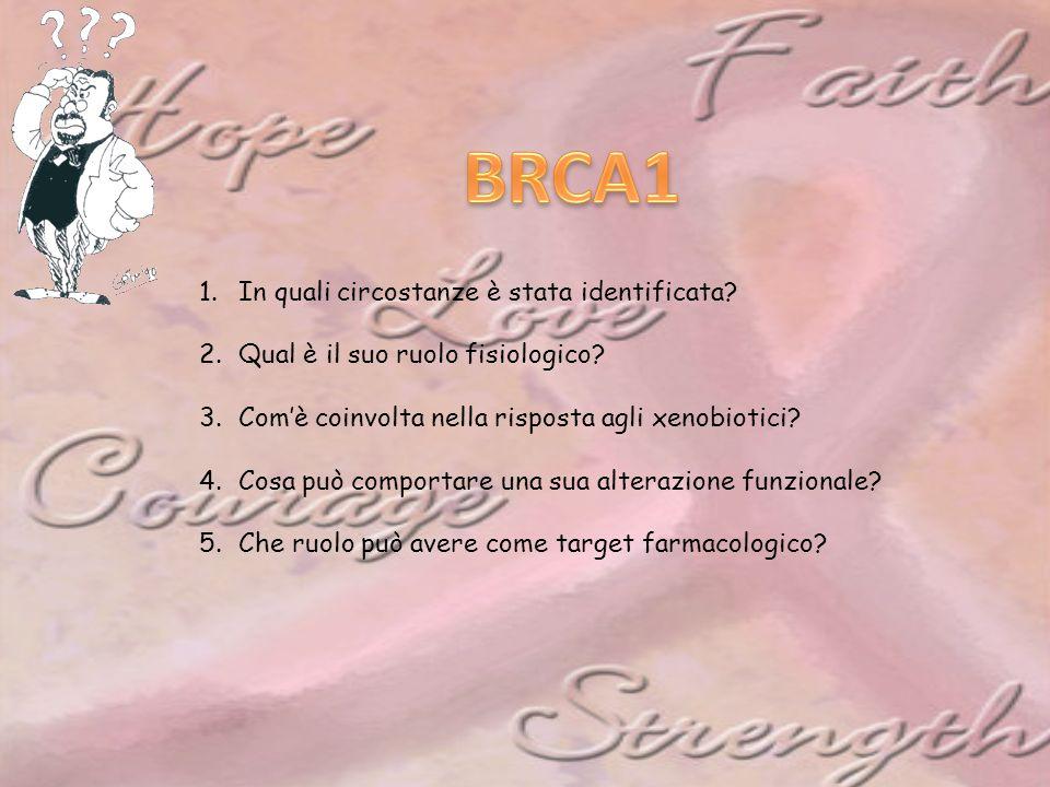 BRCA1 In quali circostanze è stata identificata