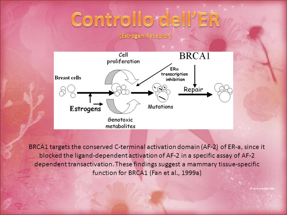 Controllo dell'ER (Estrogen Receptor) BRCA1 targets the conserved C-terminal activation domain (AF-2) of ER-a, since it.