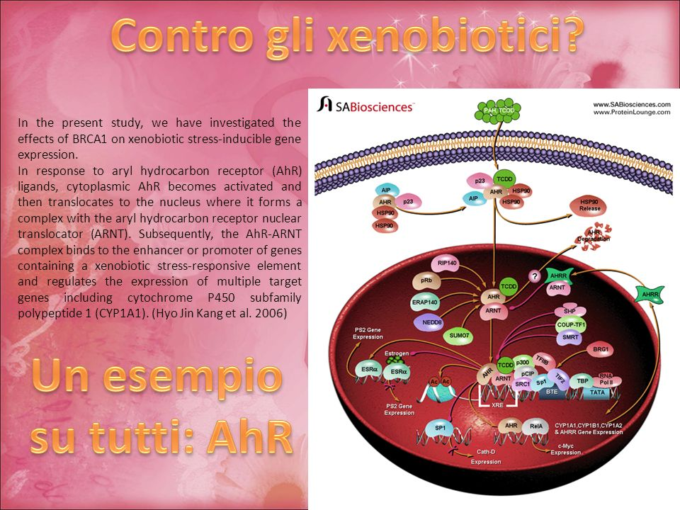 Contro gli xenobiotici