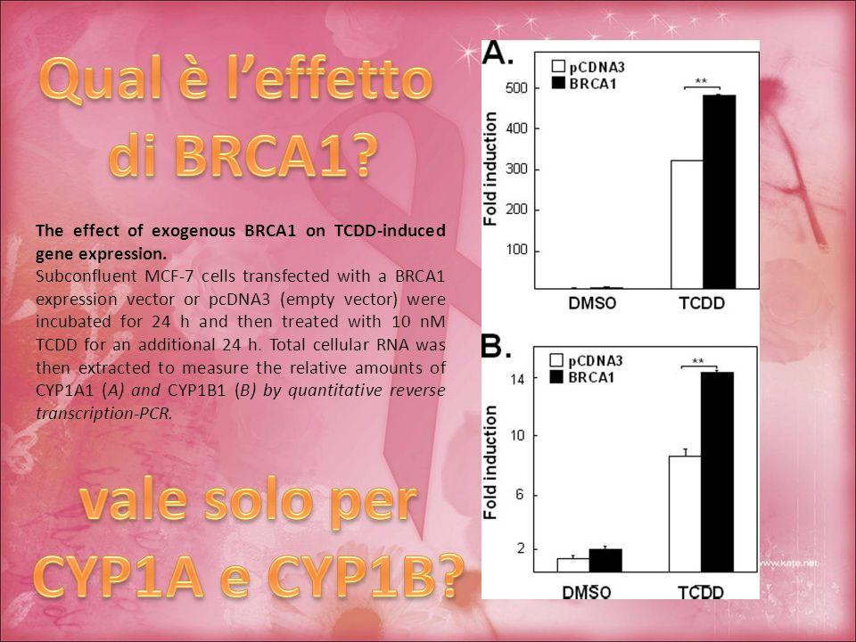 Qual è l'effetto di BRCA1 vale solo per CYP1A e CYP1B