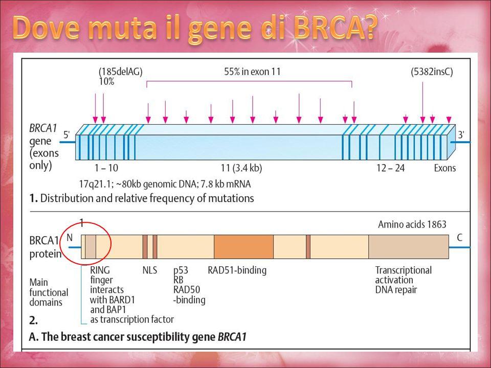 Dove muta il gene di BRCA