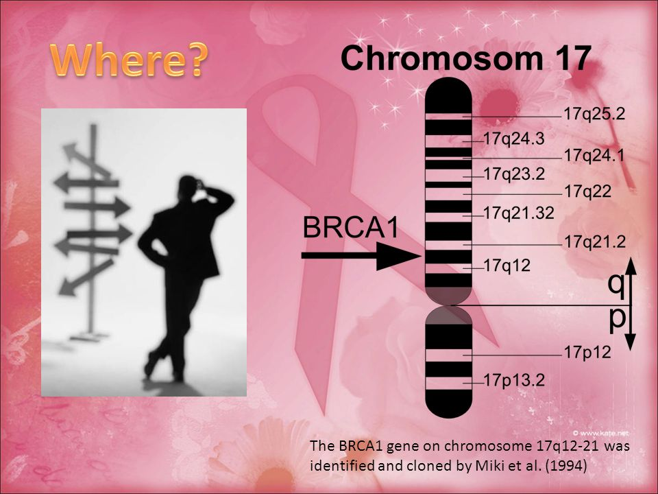 Where The BRCA1 gene on chromosome 17q12-21 was identified and cloned by Miki et al. (1994)
