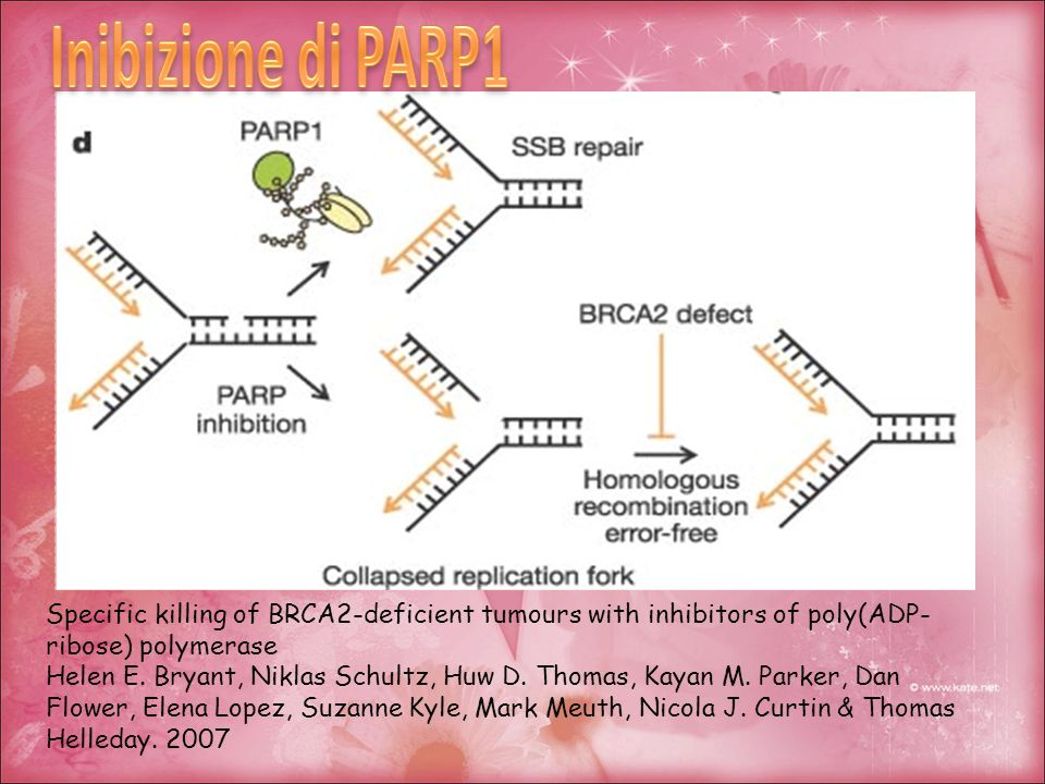 Inibizione di PARP1 Specific killing of BRCA2-deficient tumours with inhibitors of poly(ADP-ribose) polymerase.