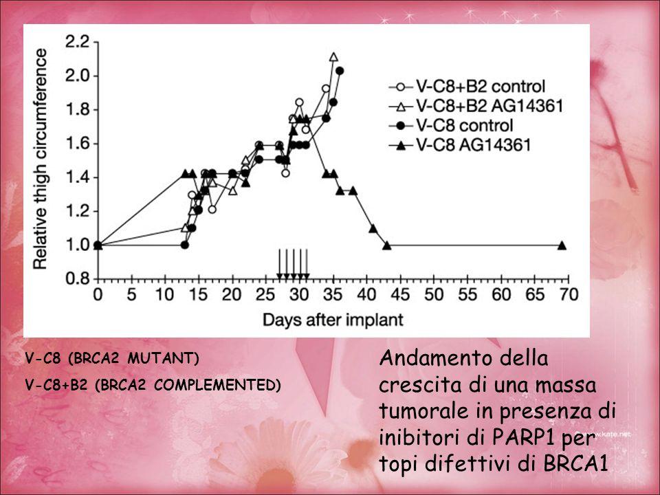 Andamento della crescita di una massa tumorale in presenza di inibitori di PARP1 per topi difettivi di BRCA1