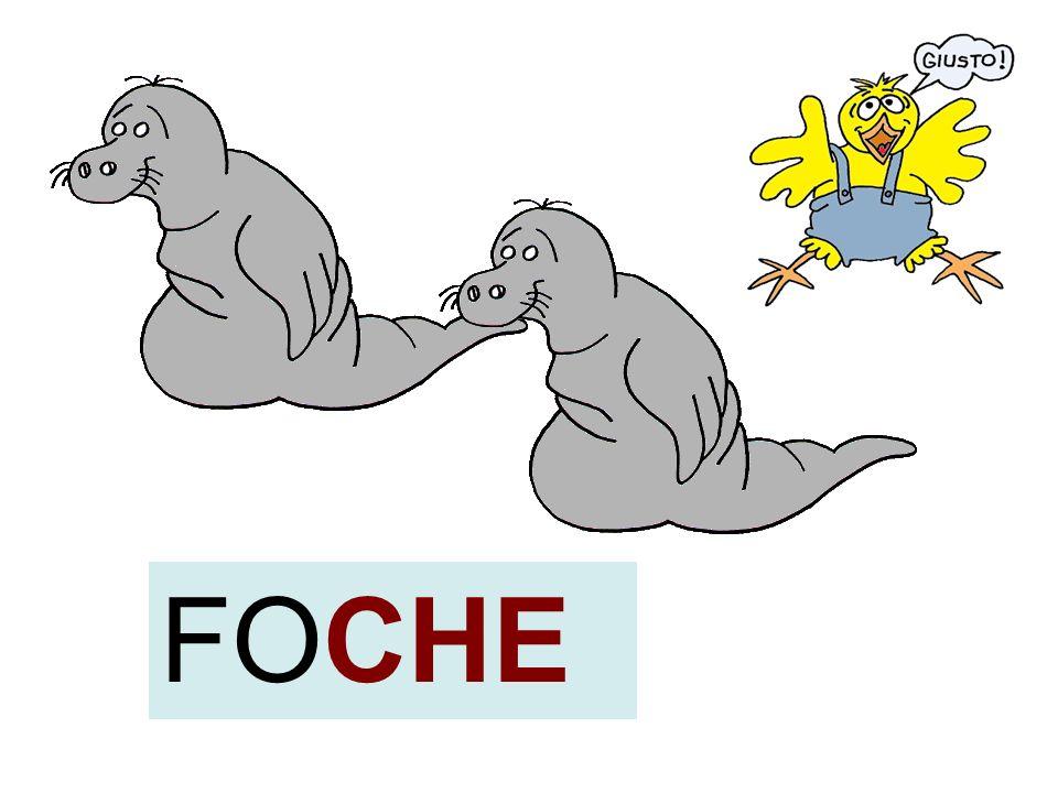 FOCHE