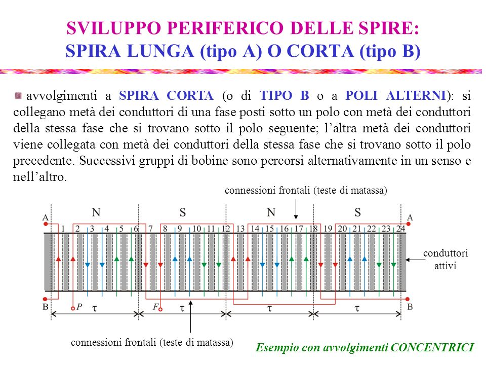 SVILUPPO PERIFERICO DELLE SPIRE: SPIRA LUNGA (tipo A) O CORTA (tipo B)