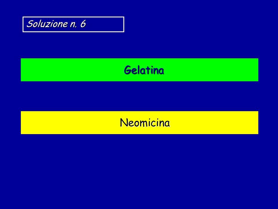 Soluzione n. 6 Gelatina Neomicina