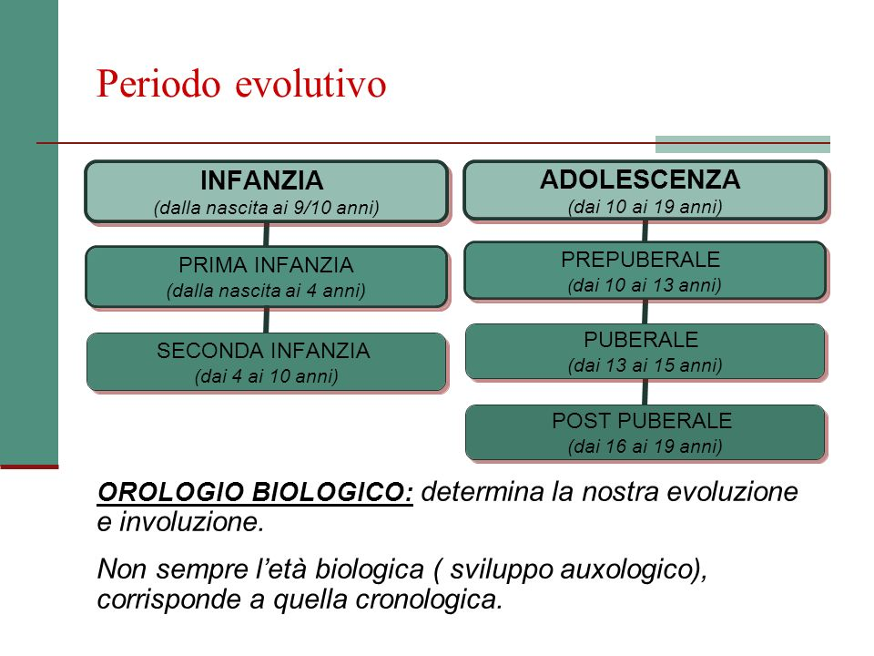 Periodo evolutivo e involuzione.