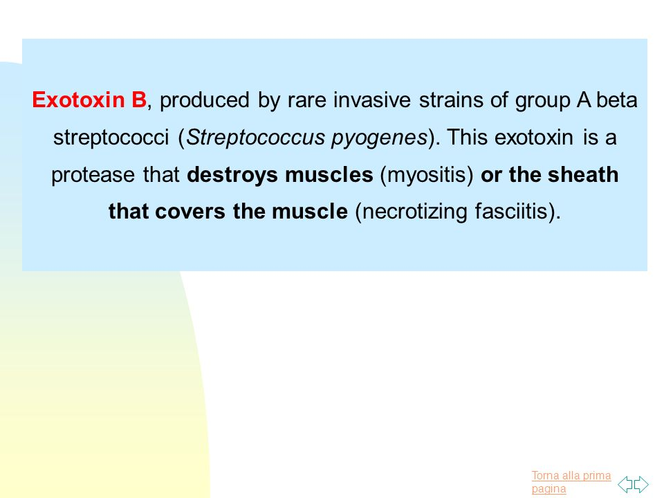 Exotoxin B, produced by rare invasive strains of group A beta streptococci (Streptococcus pyogenes).