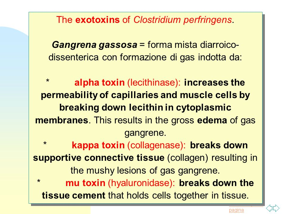 The exotoxins of Clostridium perfringens.