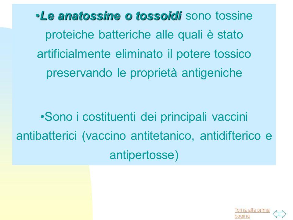 Le anatossine o tossoidi sono tossine proteiche batteriche alle quali è stato artificialmente eliminato il potere tossico preservando le proprietà antigeniche