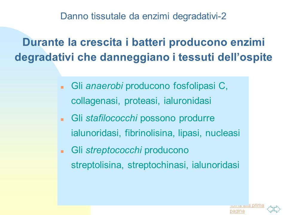 Danno tissutale da enzimi degradativi-2 Durante la crescita i batteri producono enzimi degradativi che danneggiano i tessuti dell'ospite