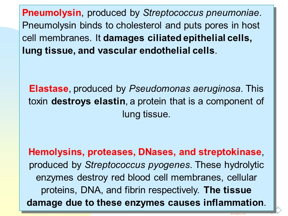 Pneumolysin, produced by Streptococcus pneumoniae