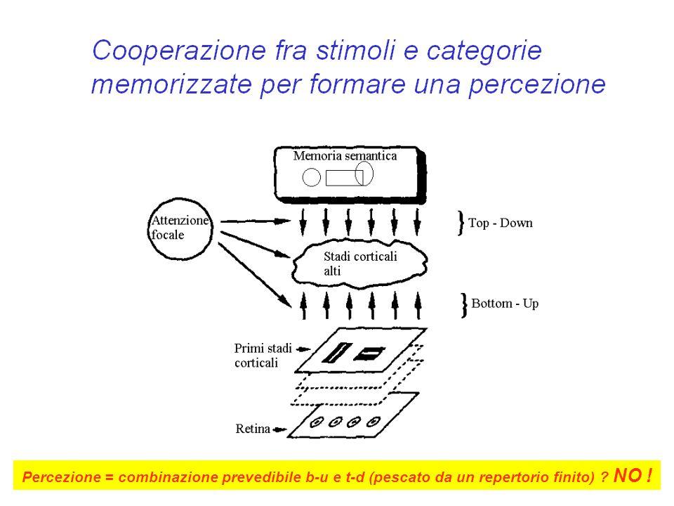 Percezione = combinazione prevedibile b-u e t-d (pescato da un repertorio finito) NO !