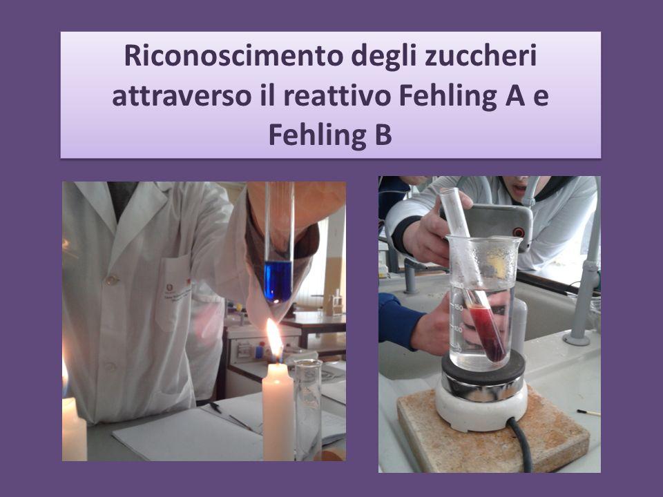Riconoscimento degli zuccheri attraverso il reattivo Fehling A e Fehling B