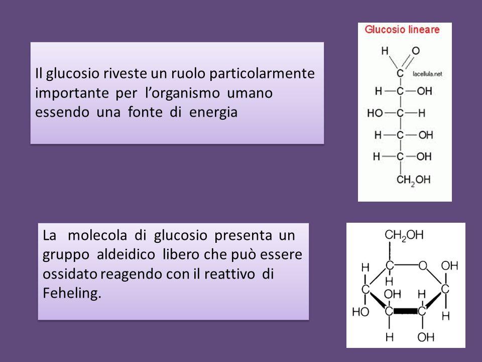 Il glucosio riveste un ruolo particolarmente importante per l'organismo umano essendo una fonte di energia