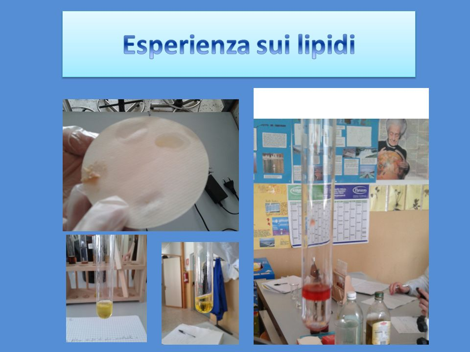 Esperienza sui lipidi