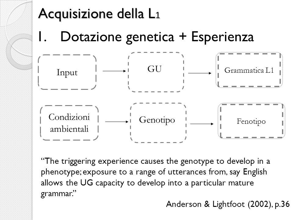 Dotazione genetica + Esperienza