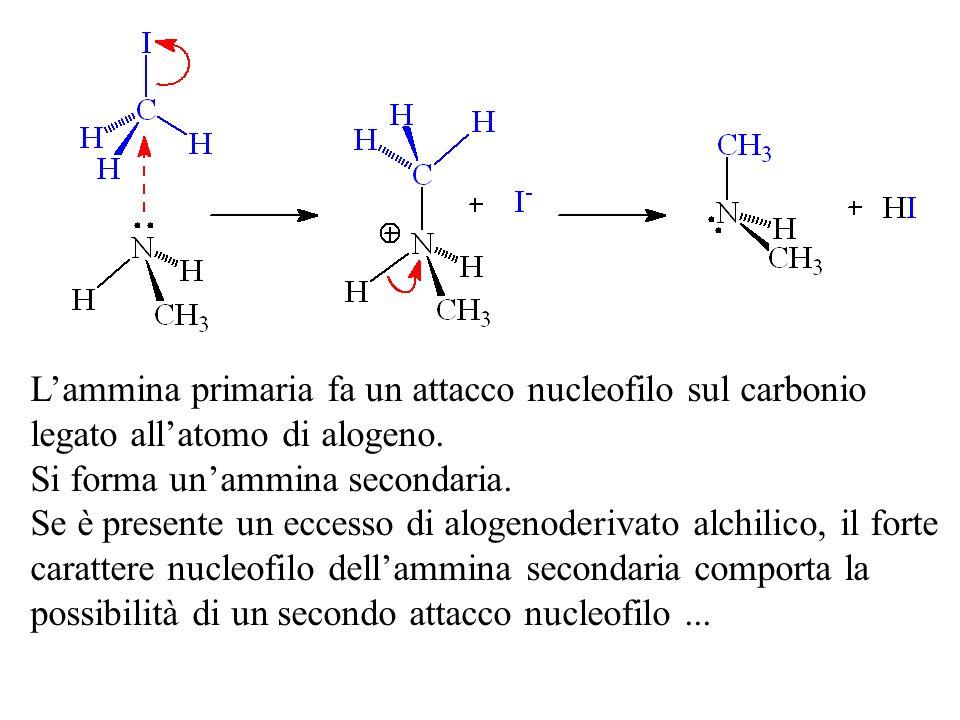 L'ammina primaria fa un attacco nucleofilo sul carbonio