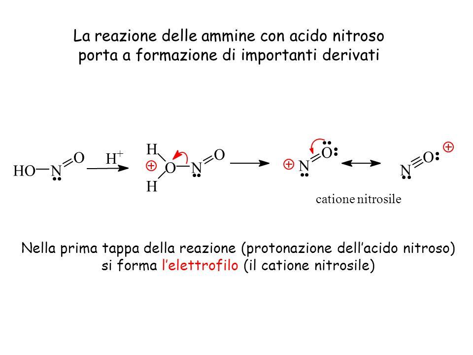 La reazione delle ammine con acido nitroso porta a formazione di importanti derivati