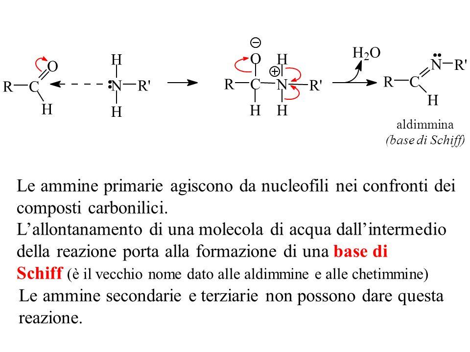 Le ammine primarie agiscono da nucleofili nei confronti dei