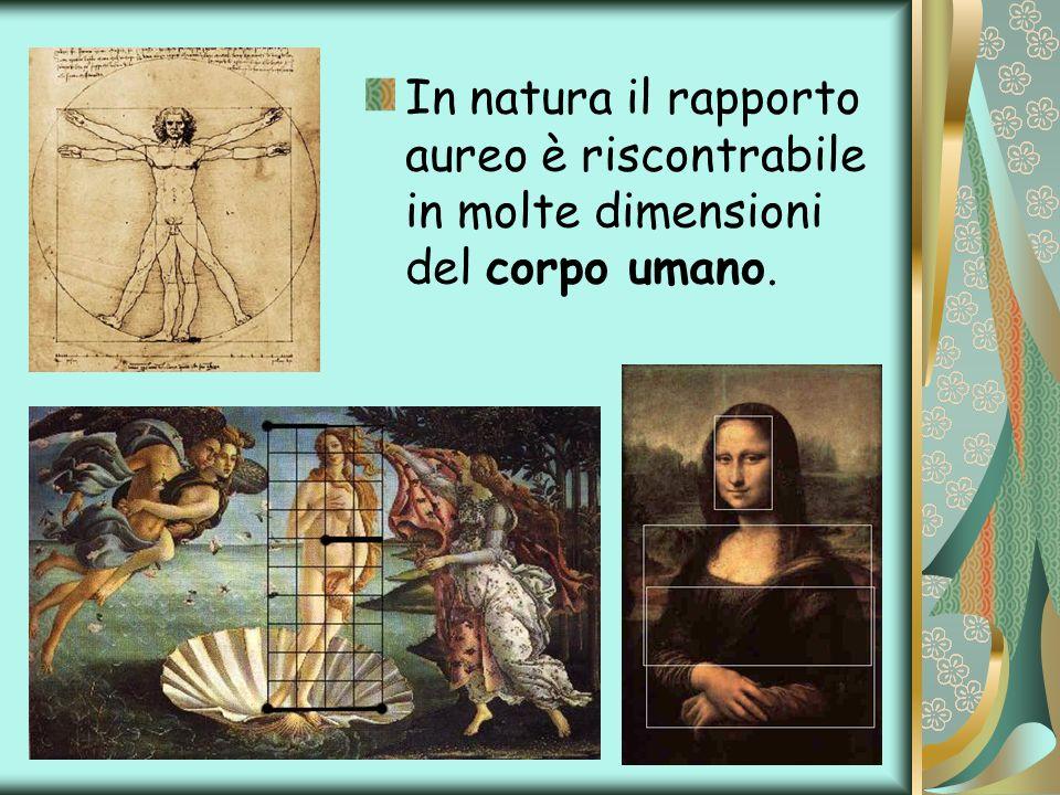 In natura il rapporto aureo è riscontrabile in molte dimensioni del corpo umano.
