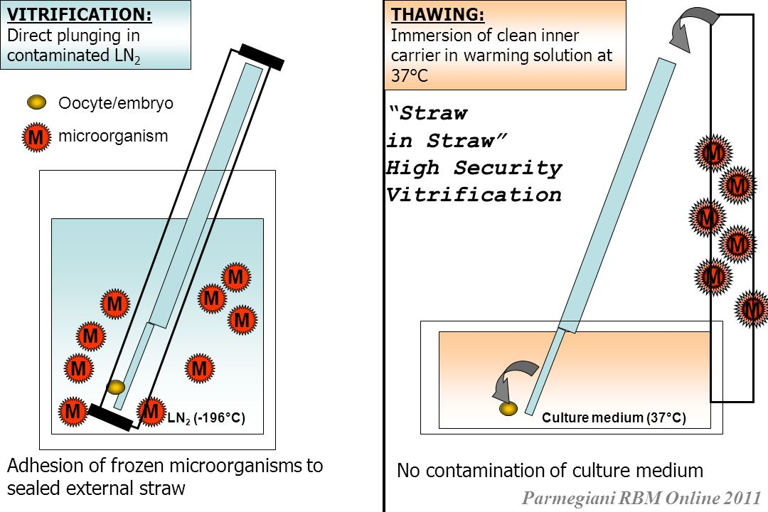 Straw in Straw High Security Vitrification M M M M M M M M M M M M M