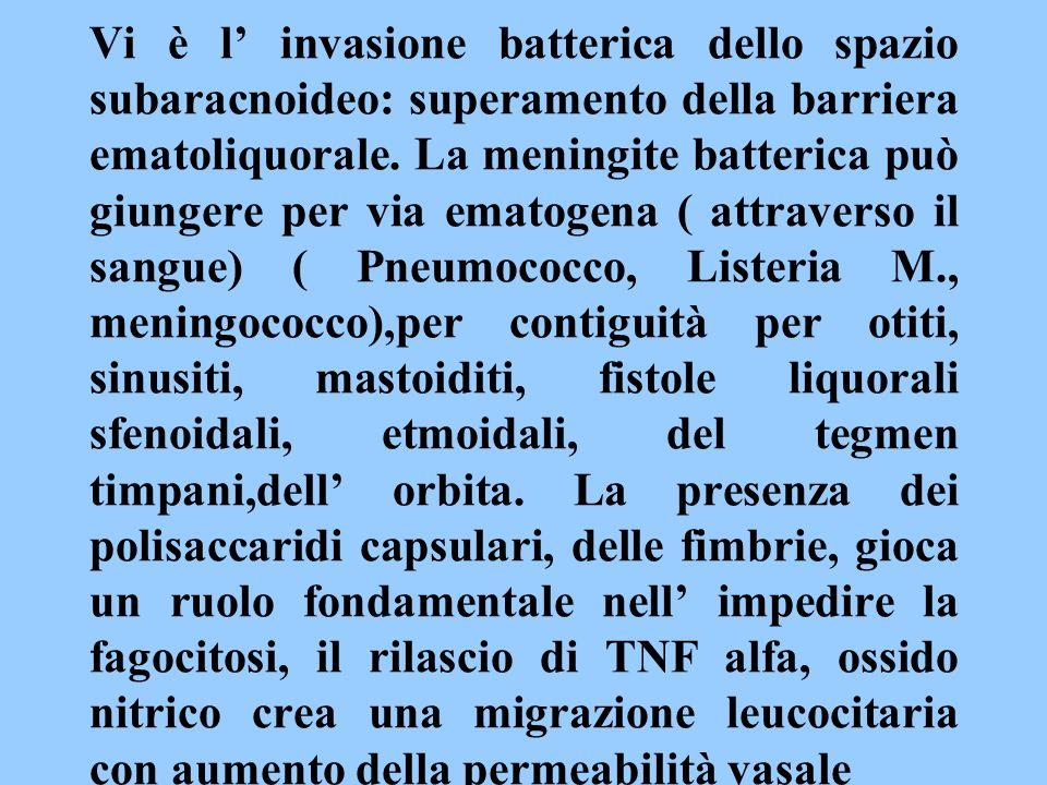 Vi è l' invasione batterica dello spazio subaracnoideo: superamento della barriera ematoliquorale.