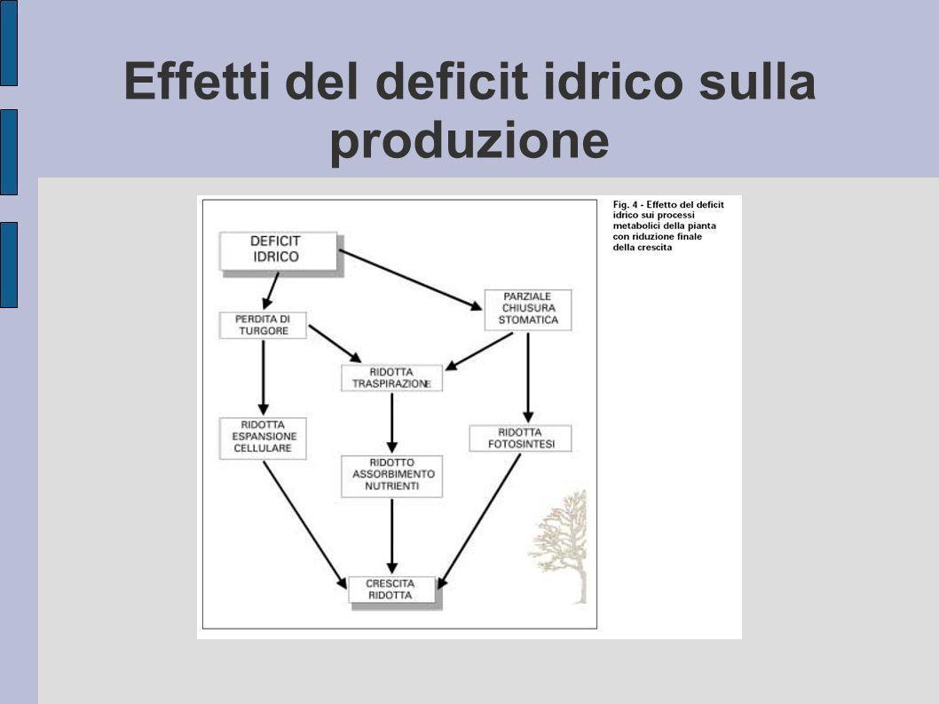 Effetti del deficit idrico sulla produzione