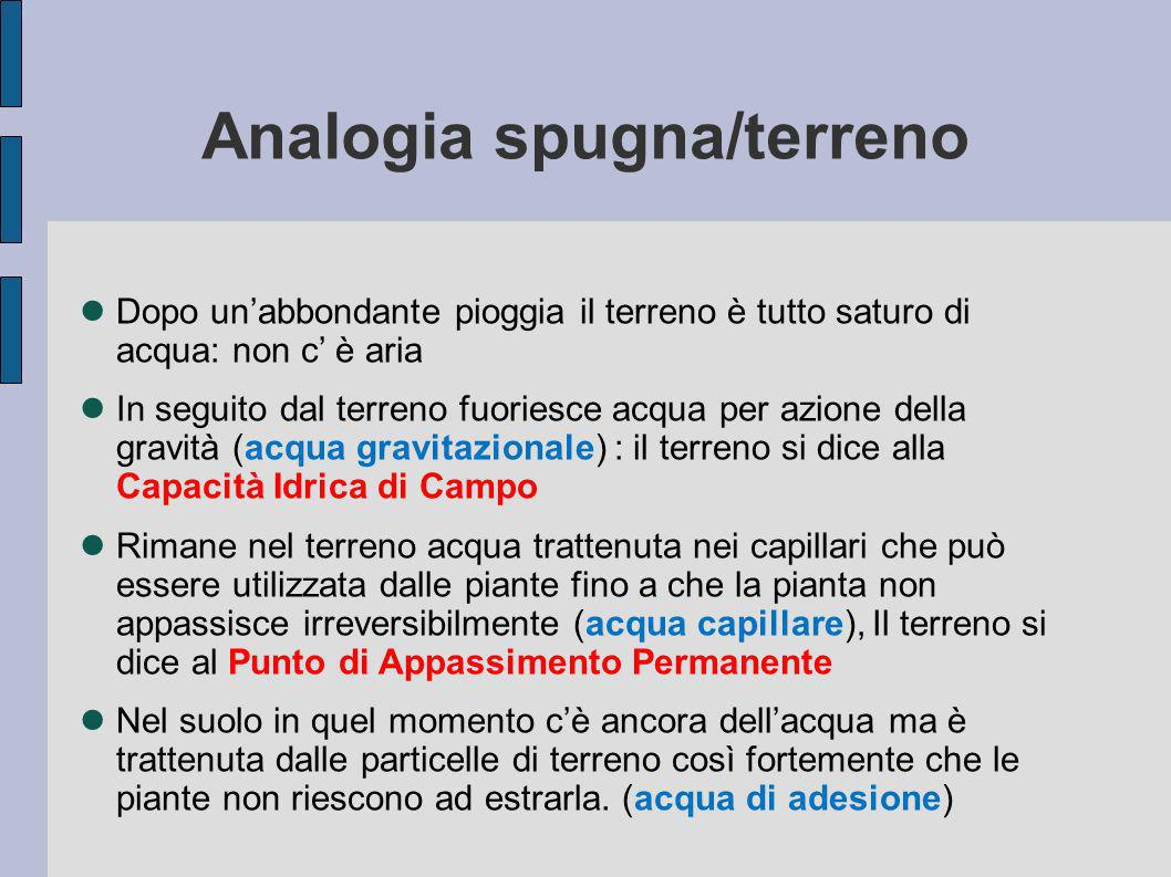 Analogia spugna/terreno