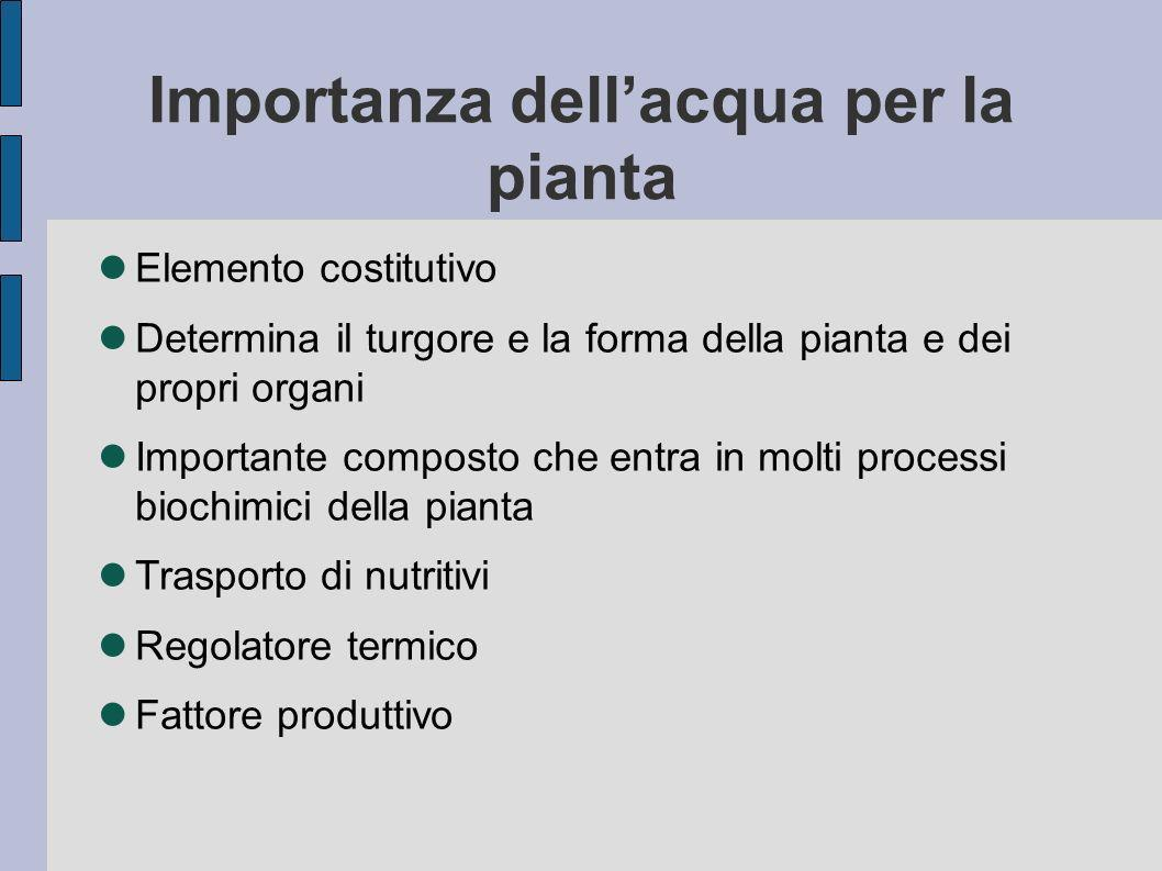 Importanza dell'acqua per la pianta
