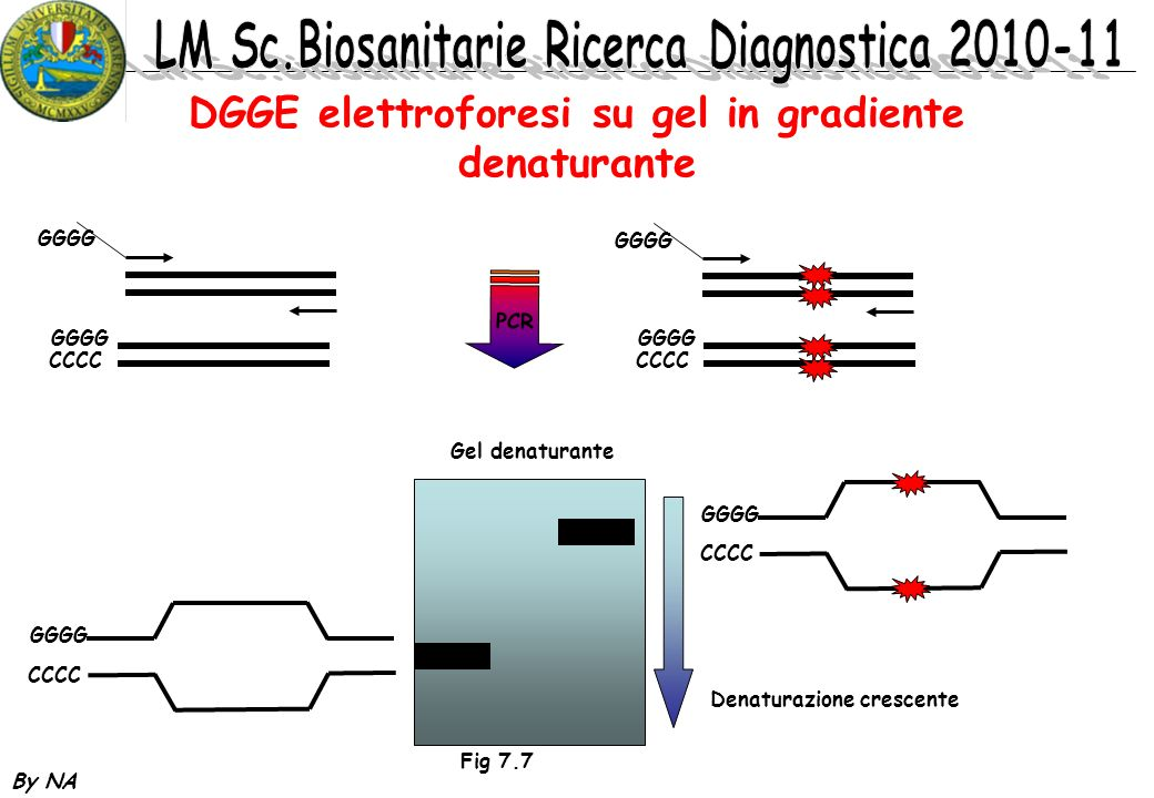 DGGE elettroforesi su gel in gradiente denaturante