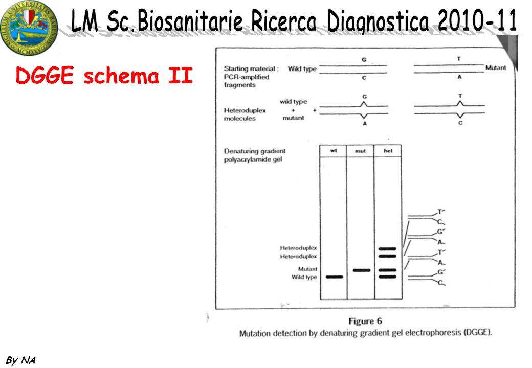 DGGE schema II By NA