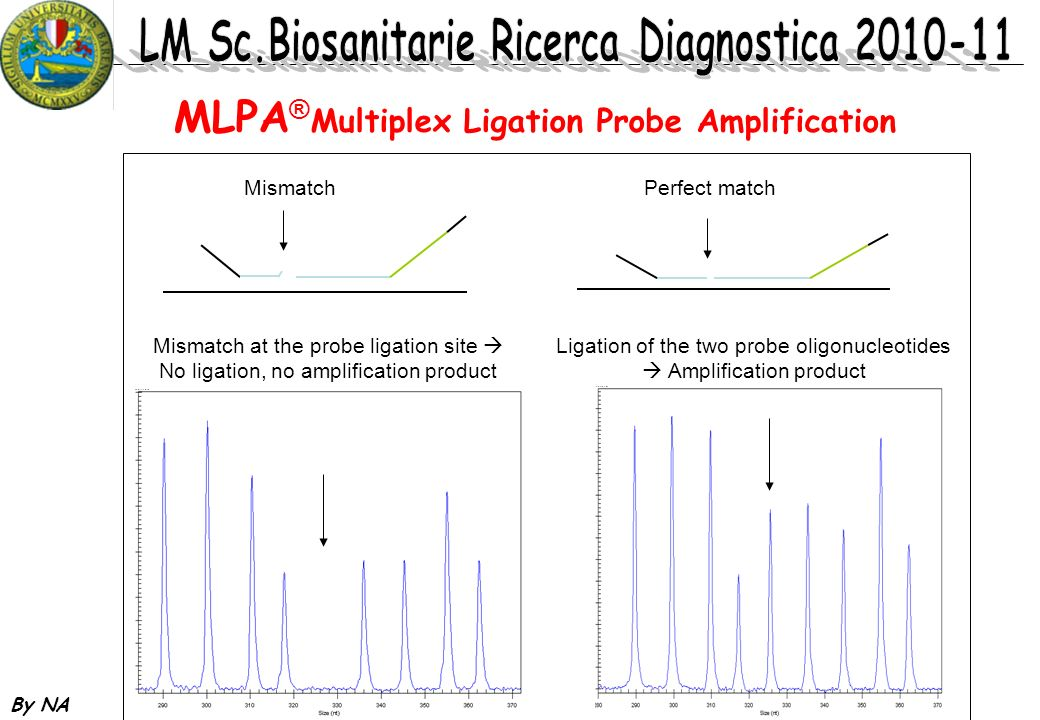 MLPA®Multiplex Ligation Probe Amplification