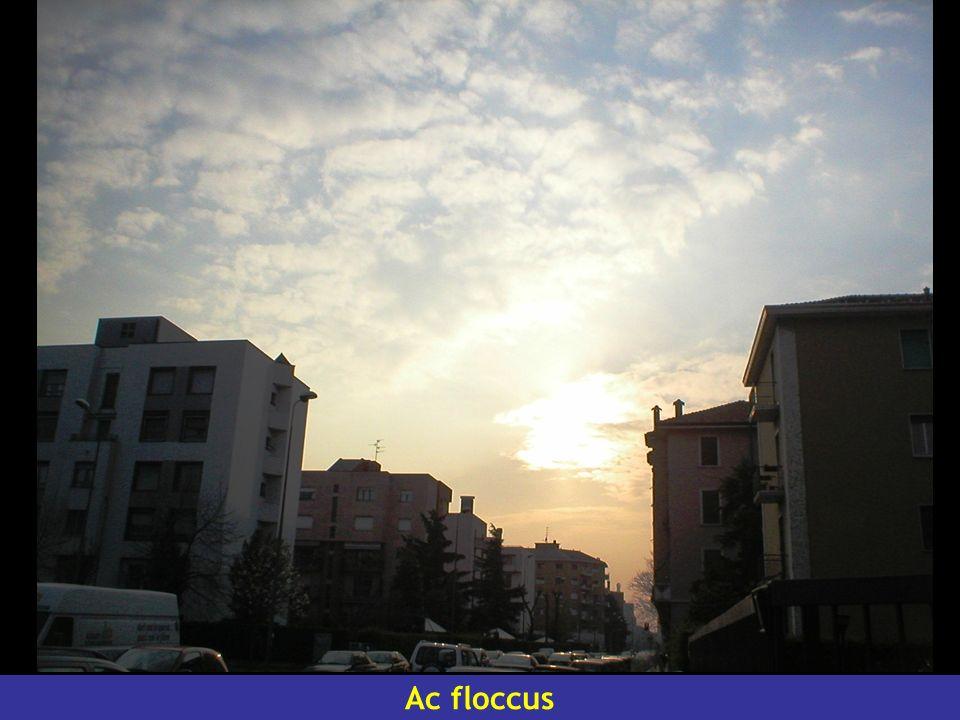Ac floccus