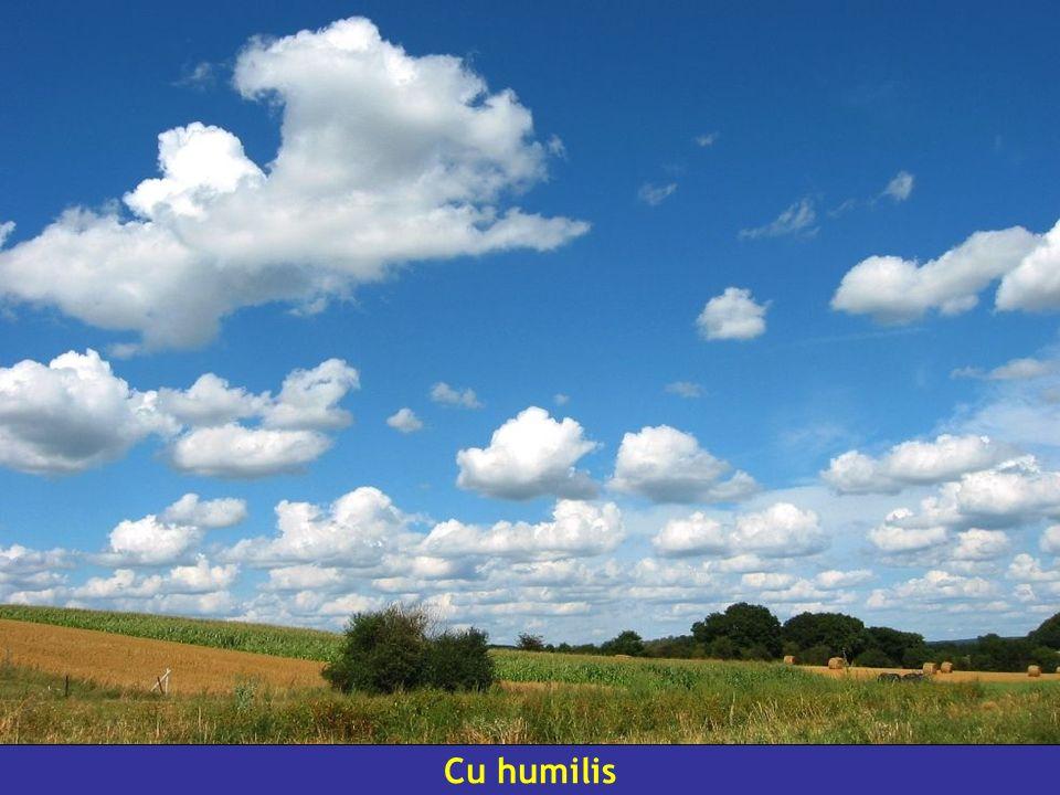 Cu humilis