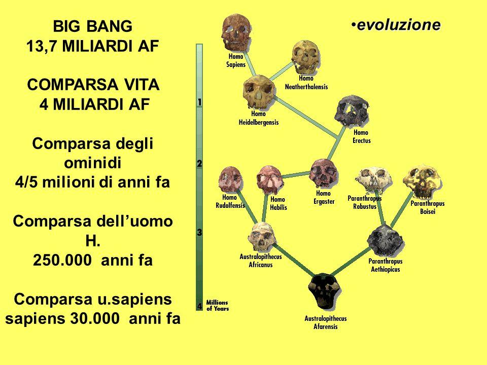 Comparsa degli ominidi Comparsa u.sapiens sapiens 30.000 anni fa
