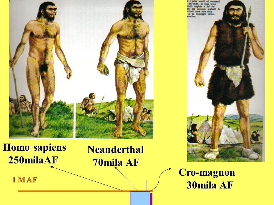 Homo sapiens Neanderthal 250milaAF 70mila AF Cro-magnon 30mila AF