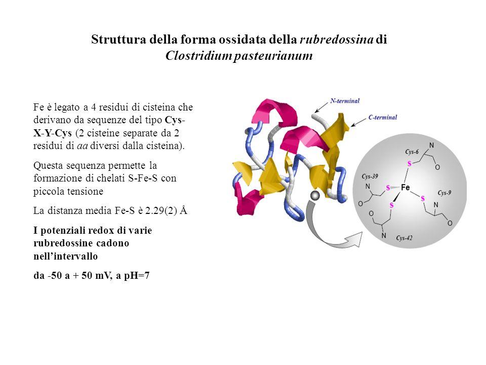 Struttura della forma ossidata della rubredossina di Clostridium pasteurianum
